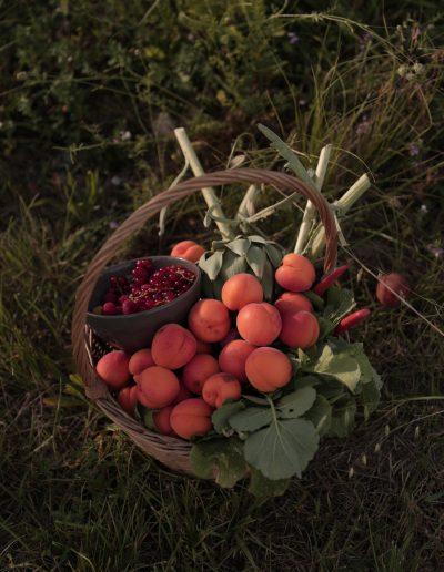 Les récoltes du jardin