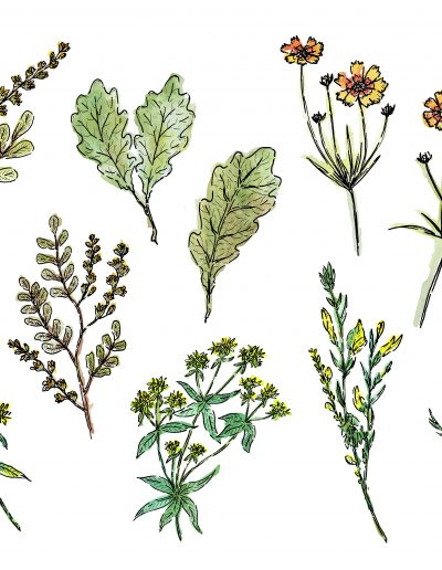 Kydra Nature - Les plantes tinctoriales - Laboratoire Ducastel
